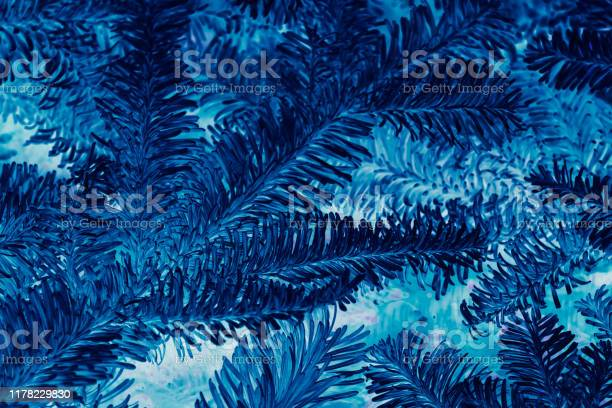 Photo of abstract winter background blue fir tree negative