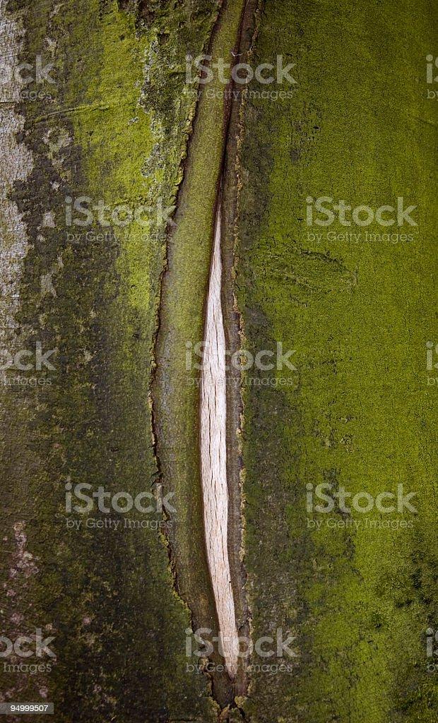 Abstrakte Holz – Foto