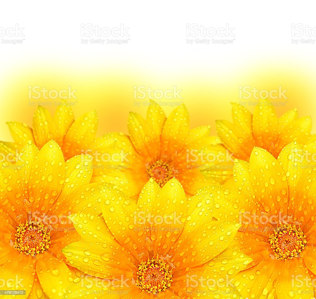 Abstract Yellow Flower Background Stock Photo More Pictures Of