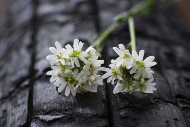 火で焦げた木の幹に野生の花を持つ抽象化 ストックフォト
