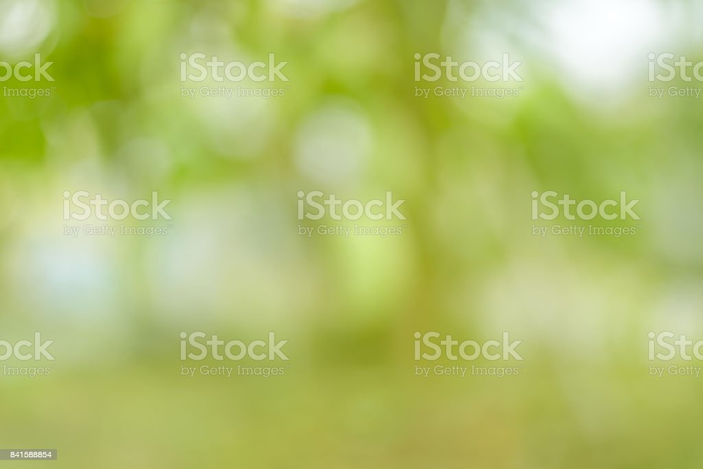 Abstruct blurred green leaves nature background in day time with bokeh and flare of light stock photo