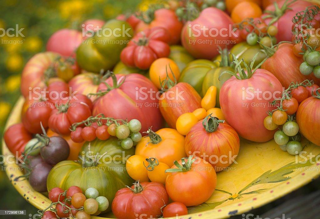 Abundance of Fresh Picked Heirloom Tomatoes royalty-free stock photo