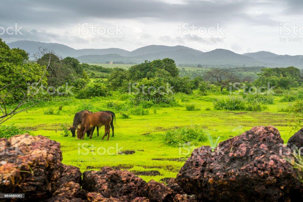 Abundance of Pasture to graze stock photo