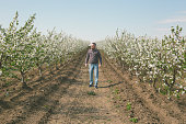 Handsome adult man farmer enjoy walking at his blooming orchard in springtime. Photo is taken with full frame dslr camera outdoors on sunny day.