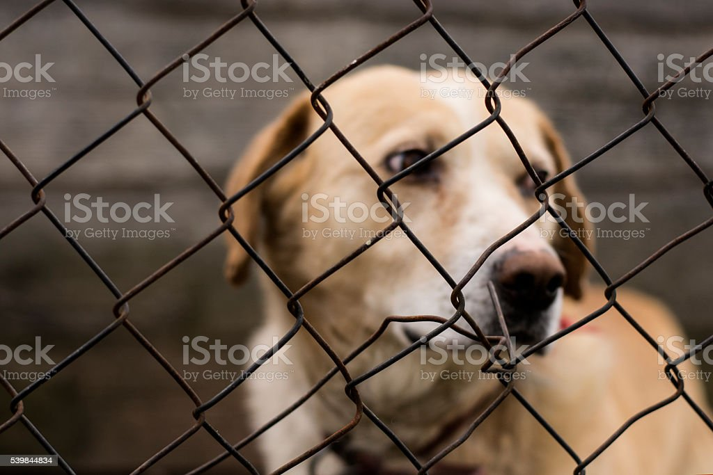 Abused abandoned dog in exile stock photo