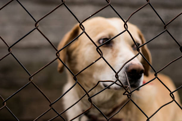 Abused abandoned dog in exile Abused abandoned dog in exile looking sad animal testing stock pictures, royalty-free photos & images