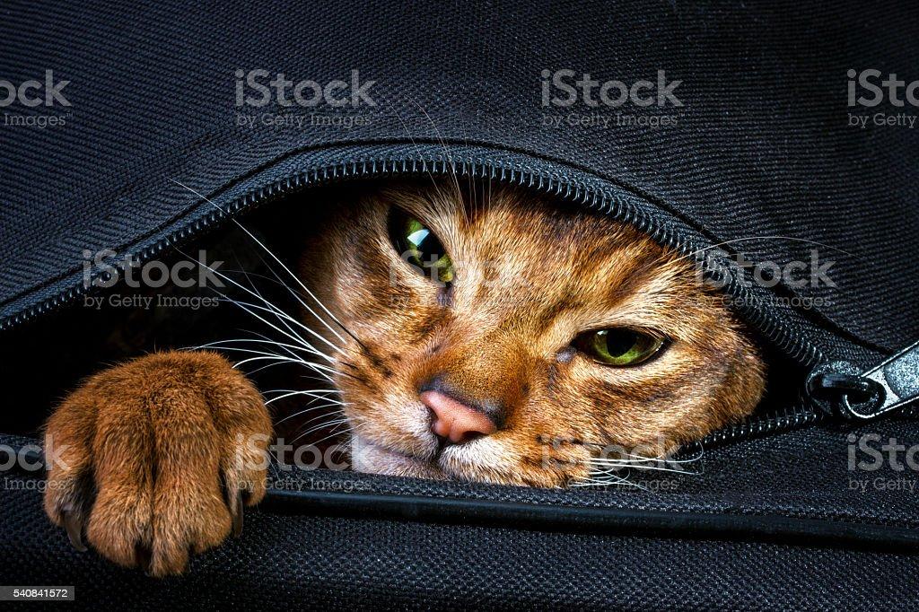 Resultado de imagen de cat in bag