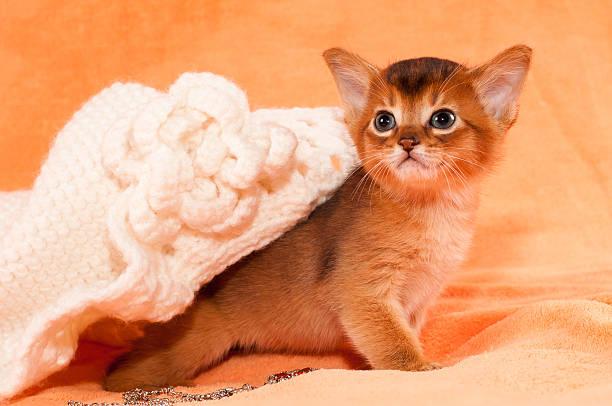 rosetten kitten porträt - katzenhüte häkeln stock-fotos und bilder