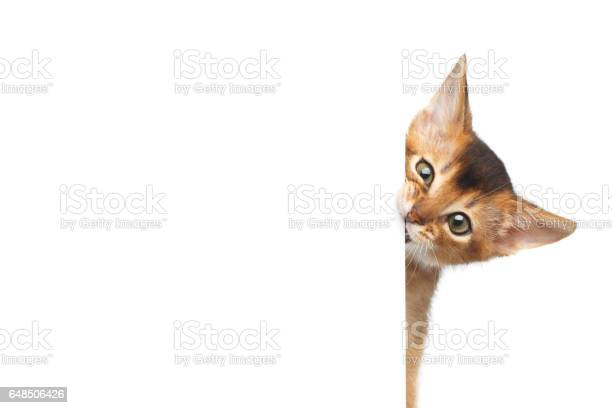 Abyssinian kitty on isolated white background picture id648506426?b=1&k=6&m=648506426&s=612x612&h=ry98kg6tjsnts64 e7x9rtk2j9p1ycuxslfbqmvnahs=
