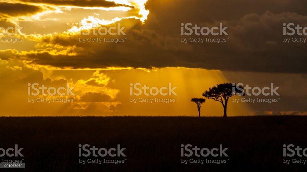 Acacia at golden hour stock photo