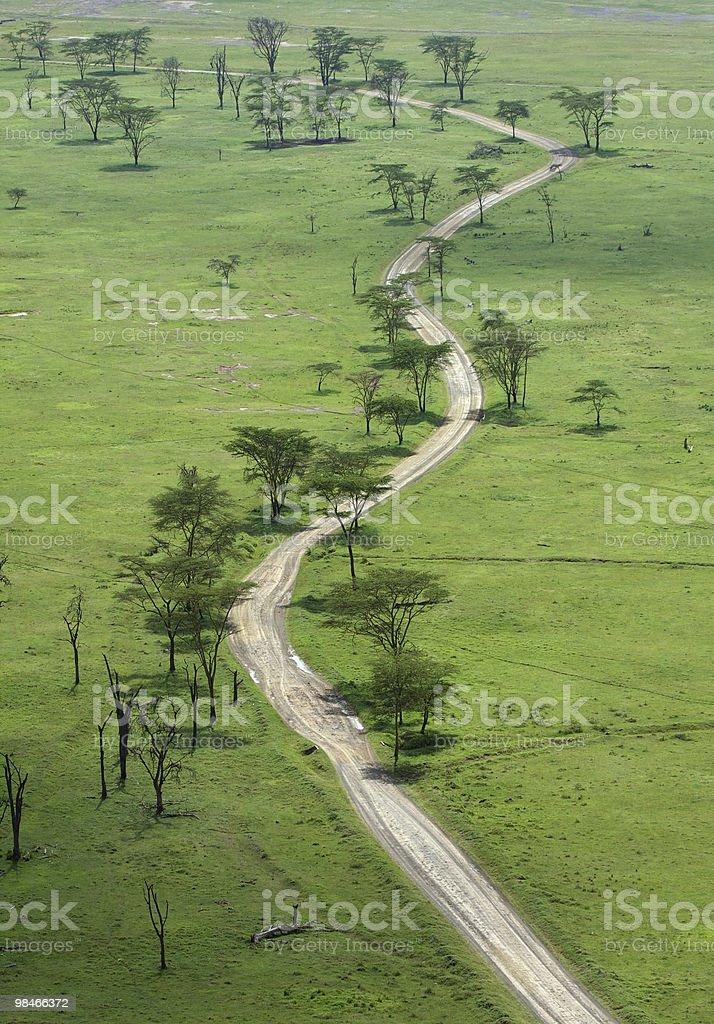 acacia green royalty-free stock photo