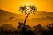 African Acacia trees in the warm light of a late afternoon, Serengeti National Park, Tanzania/East Africa.\n\nSee more of my photos of landscapes and sunsets in Africa:\n[url=file_closeup?id=5889447][img]/file_thumbview/5889447/1[/img][/url] [url=file_closeup?id=5992282][img]/file_thumbview/5992282/1[/img][/url] [url=file_closeup?id=5826964][img]/file_thumbview/5826964/1[/img][/url] [url=file_closeup?id=11827986][img]/file_thumbview/11827986/1[/img][/url] [url=file_closeup?id=6135834][img]/file_thumbview/6135834/1[/img][/url] [url=file_closeup?id=11827972][img]/file_thumbview/11827972/1[/img][/url] [url=file_closeup?id=6082863][img]/file_thumbview/6082863/1[/img][/url] [url=file_closeup?id=17371663][img]/file_thumbview/17371663/1[/img][/url] [url=file_closeup?id=17322263][img]/file_thumbview/17322263/1[/img][/url] [url=file_closeup?id=17322252][img]/file_thumbview/17322252/1[/img][/url] [url=file_closeup?id=17322248][img]/file_thumbview/17322248/1[/img][/url] [url=file_closeup?id=17322240][img]/file_thumbview/17322240/1[/img][/url] [url=file_closeup?id=17320697][img]/file_thumbview/17320697/1[/img][/url] [url=file_closeup?id=17311445][img]/file_thumbview/17311445/1[/img][/url] [url=file_closeup?id=17311421][img]/file_thumbview/17311421/1[/img][/url] [url=file_closeup?id=17264494][img]/file_thumbview/17264494/1[/img][/url] [url=file_closeup?id=17264482][img]/file_thumbview/17264482/1[/img][/url] [url=file_closeup?id=17264452][img]/file_thumbview/17264452/1[/img][/url] [url=file_closeup?id=6160297][img]/file_thumbview/6160297/1[/img][/url] [url=file_closeup?id=41595566][img]/file_thumbview/41595566/1[/img][/url] [url=file_closeup?id=41431840][img]/file_thumbview/41431840/1[/img][/url] [url=file_closeup?id=41431328][img]/file_thumbview/41431328/1[/img][/url] [url=file_closeup?id=30995034][img]/file_thumbview/30995034/1[/img][/url] [url=file_closeup?id=30338882][img]/file_thumbview/30338882/1[/img][/url]