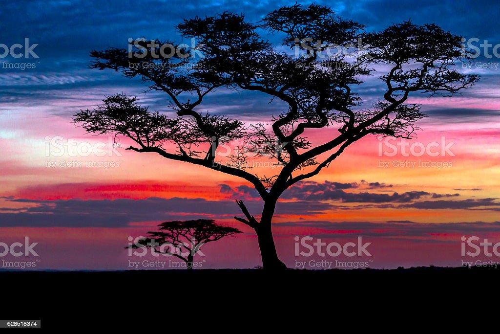 Acacia trees at Dramatic Sunrise stock photo