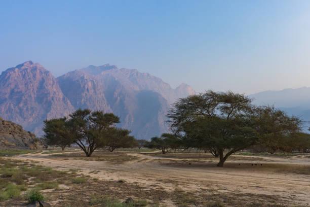 Akazien auf dem Tal Etage Khasab Oman – Foto
