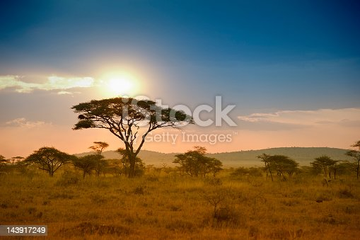 African Acacia trees in the warm light of a late afternoon, Serengeti National Park, Tanzania/East Africa.  See more of my photos of landscapes and sunsets in Africa: [url=file_closeup?id=5889447][img]/file_thumbview/5889447/1[/img][/url] [url=file_closeup?id=5992282][img]/file_thumbview/5992282/1[/img][/url] [url=file_closeup?id=5826964][img]/file_thumbview/5826964/1[/img][/url] [url=file_closeup?id=11827986][img]/file_thumbview/11827986/1[/img][/url] [url=file_closeup?id=6135834][img]/file_thumbview/6135834/1[/img][/url] [url=file_closeup?id=11827972][img]/file_thumbview/11827972/1[/img][/url] [url=file_closeup?id=6082863][img]/file_thumbview/6082863/1[/img][/url] [url=file_closeup?id=17371663][img]/file_thumbview/17371663/1[/img][/url] [url=file_closeup?id=17322263][img]/file_thumbview/17322263/1[/img][/url] [url=file_closeup?id=17322252][img]/file_thumbview/17322252/1[/img][/url] [url=file_closeup?id=17322248][img]/file_thumbview/17322248/1[/img][/url] [url=file_closeup?id=17322240][img]/file_thumbview/17322240/1[/img][/url] [url=file_closeup?id=17320697][img]/file_thumbview/17320697/1[/img][/url] [url=file_closeup?id=17311445][img]/file_thumbview/17311445/1[/img][/url] [url=file_closeup?id=17311421][img]/file_thumbview/17311421/1[/img][/url] [url=file_closeup?id=17264494][img]/file_thumbview/17264494/1[/img][/url] [url=file_closeup?id=17264482][img]/file_thumbview/17264482/1[/img][/url] [url=file_closeup?id=17264452][img]/file_thumbview/17264452/1[/img][/url] [url=file_closeup?id=6160297][img]/file_thumbview/6160297/1[/img][/url] [url=file_closeup?id=41595566][img]/file_thumbview/41595566/1[/img][/url] [url=file_closeup?id=41431840][img]/file_thumbview/41431840/1[/img][/url] [url=file_closeup?id=41431328][img]/file_thumbview/41431328/1[/img][/url] [url=file_closeup?id=30995034][img]/file_thumbview/30995034/1[/img][/url] [url=file_closeup?id=30338882][img]/file_thumbview/30338882/1[/img][/url]