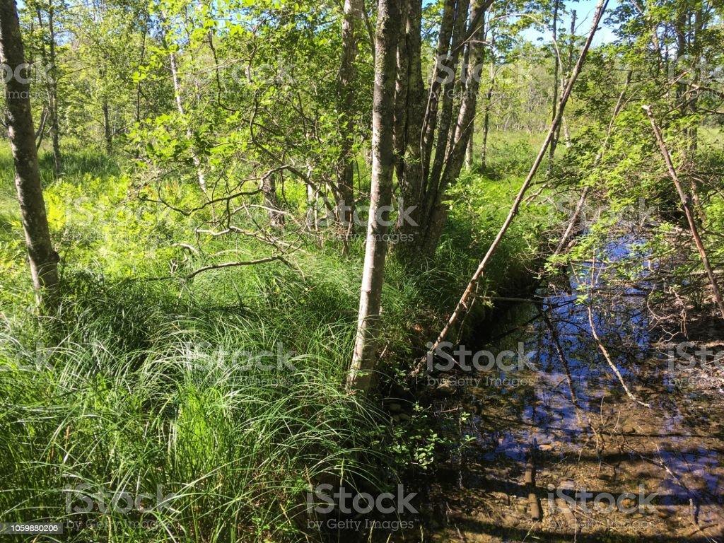 IMG_4938 Acadia National Park stock photo