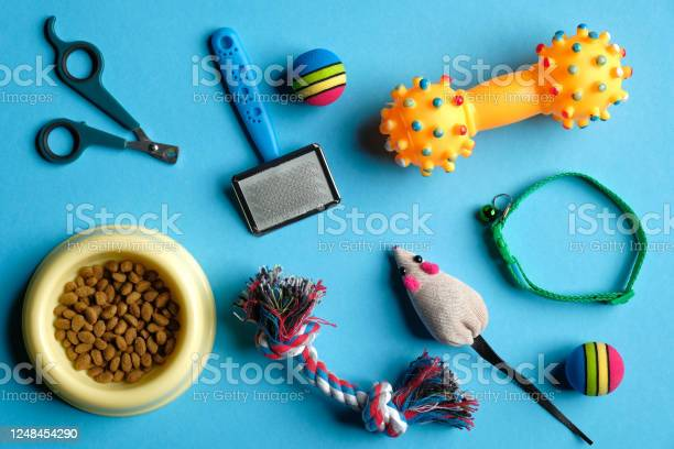 Accessories for cat and dog on blue background pet care and training picture id1248454290?b=1&k=6&m=1248454290&s=612x612&h=fy9ic5vvlivm7fuuaz7rvobsteuevcruxmrbqgyij2g=