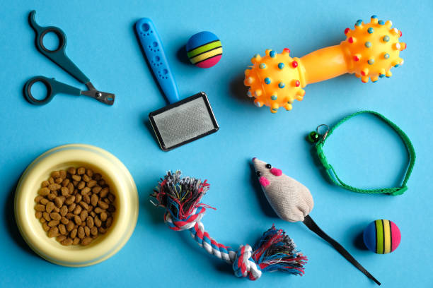 Accessories for cat and dog on blue background. Pet care and training concept. Flat lay, top view.