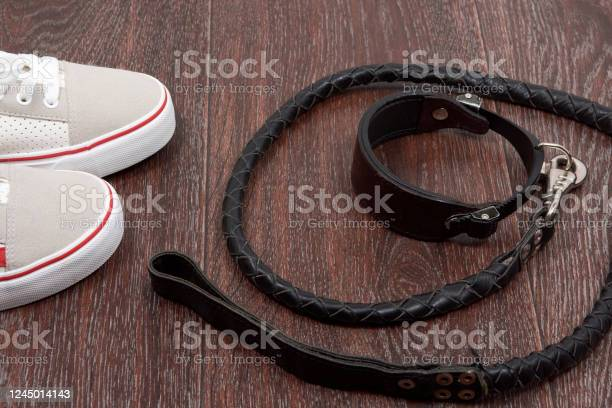 Accessories for walking with a pet sneakers collar leash for walking picture id1245014143?b=1&k=6&m=1245014143&s=612x612&h=cgpsdobfesmk5mncvrhaivvlrk0kx2aemwtuc7xyzai=