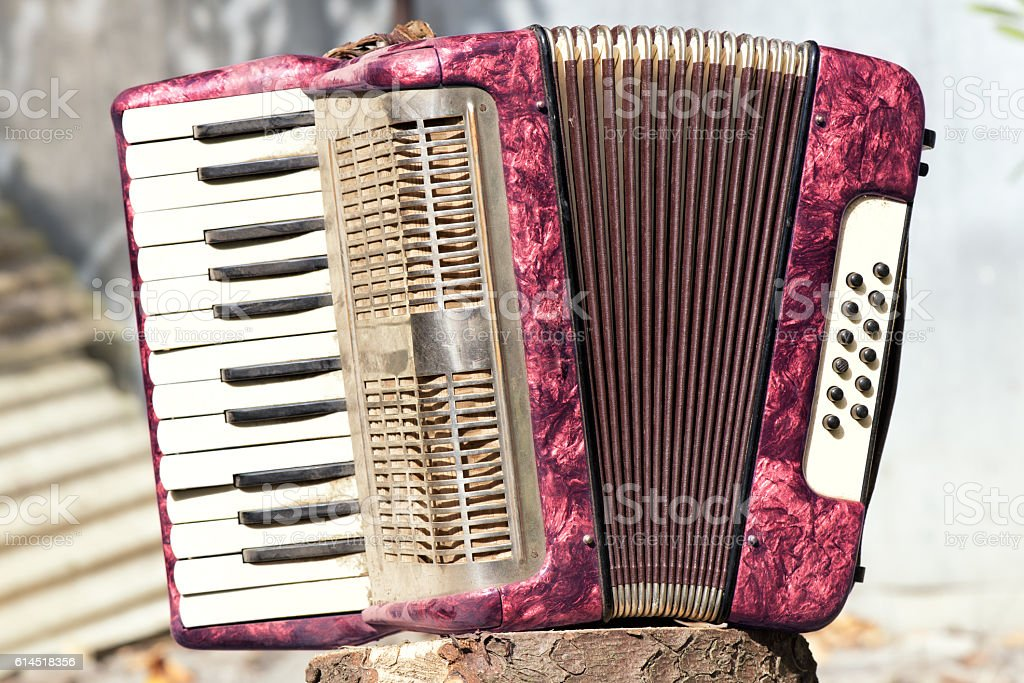 Accordion isolated – Foto