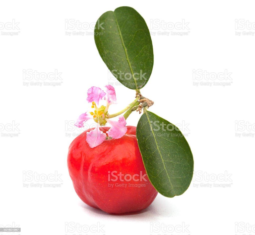 Acerola fruit isolated on the white background stock photo