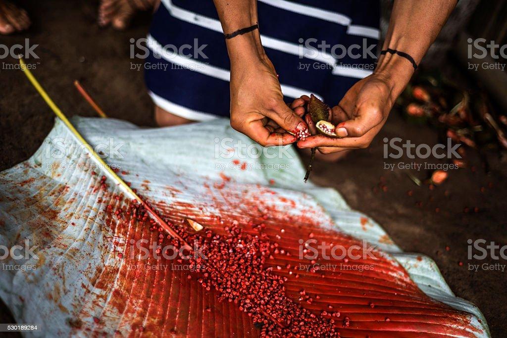Photo De Bornes Achiote Pour Une Coiffure De Los Tsachila Tribu