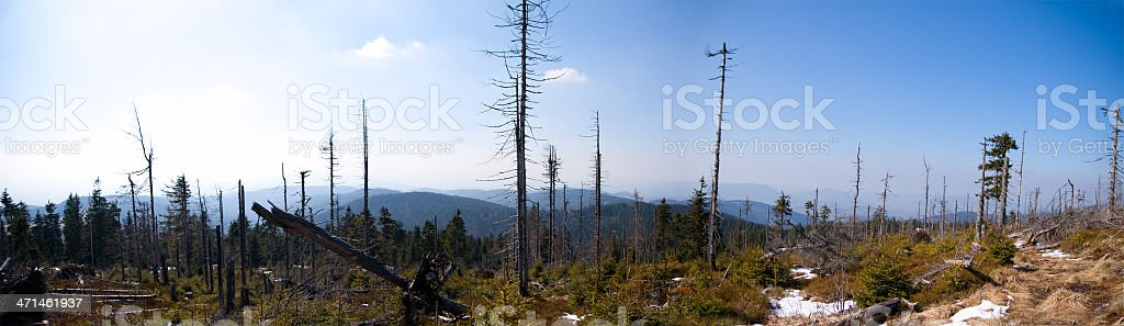 Acid rain forest stock photo