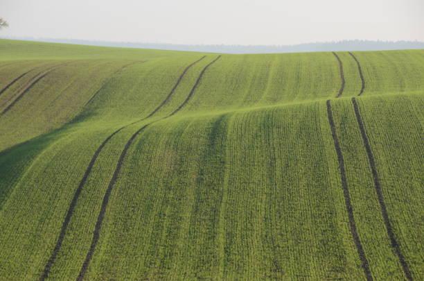 Acker mit Saatspuren Landschaft mit Hügeln und Acker mit Saatspuren monoculture stock pictures, royalty-free photos & images