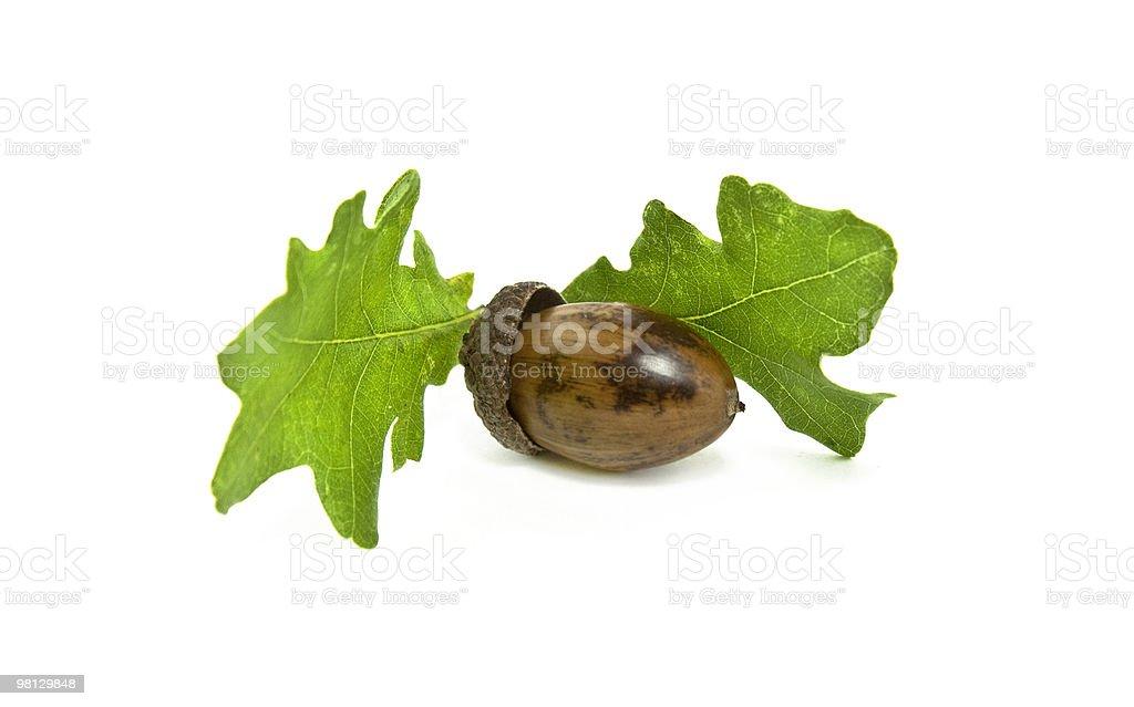 도토리 및 오크 leafs royalty-free 스톡 사진