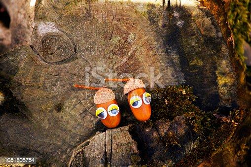 istock Acorn eyes autumn garden 1051805754