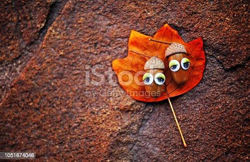 istock Acorn eyes autumn leaf 1051674046