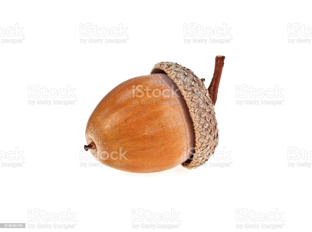 Acorn isolated on a white background stock photo
