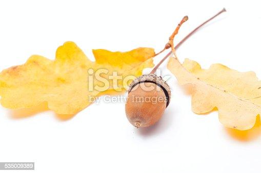 istock acorn isolated 535009389