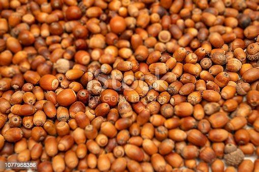 istock acorn 1077988386