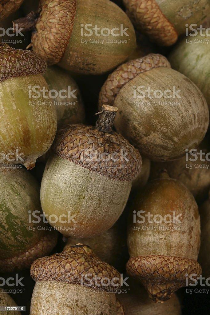 Acorn Pile stock photo