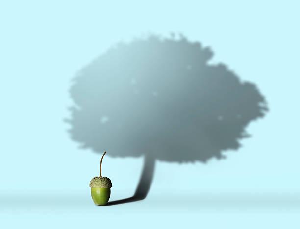 Acorn with oak tree shadow stock photo