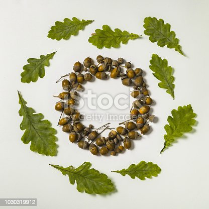 istock Acorns form circle creative shape 1030319912