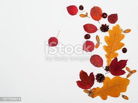 istock Acorns, leaves, chestnuts and cones, isolated on white background, flat lay, top view. The concept of autumn, end of summer 1077254314