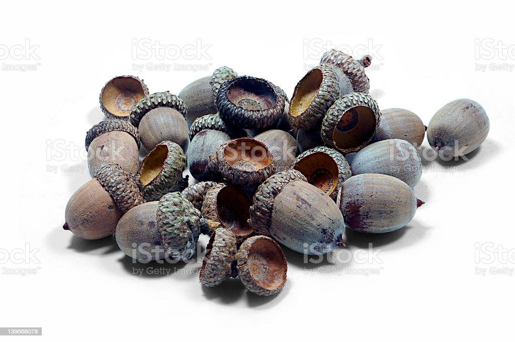 Acorns stock photo