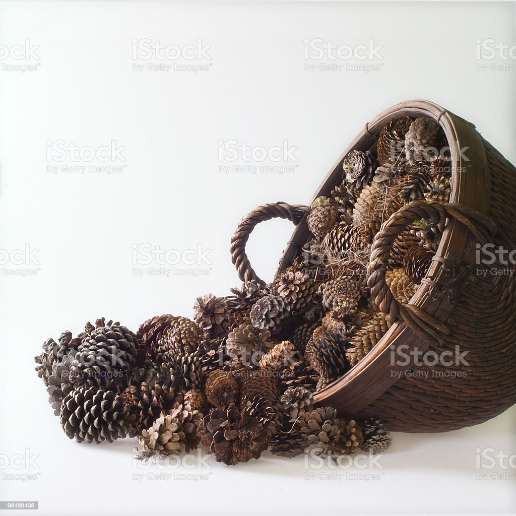 Acorns royalty-free stock photo