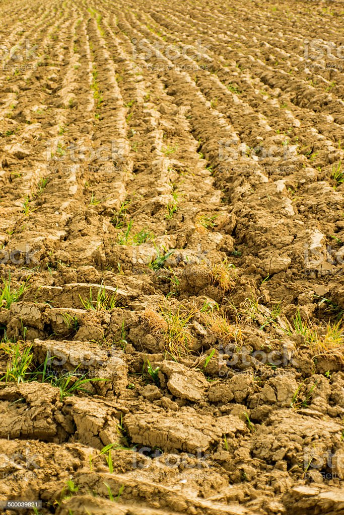 Acre in spring ready for sowing royalty-free stock photo