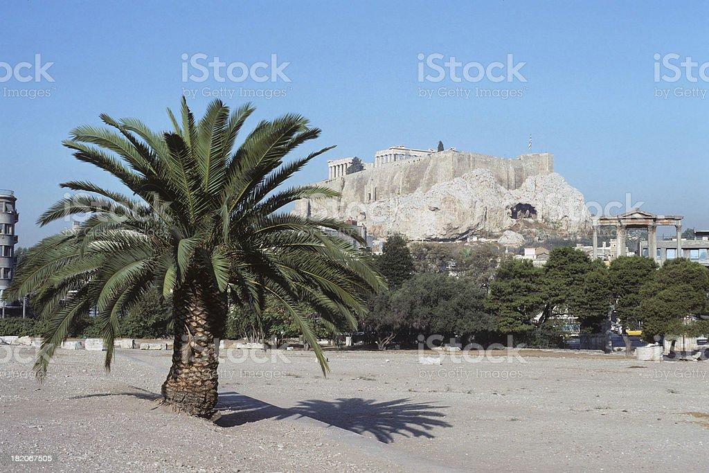 Acropolis with Palm Tree stock photo
