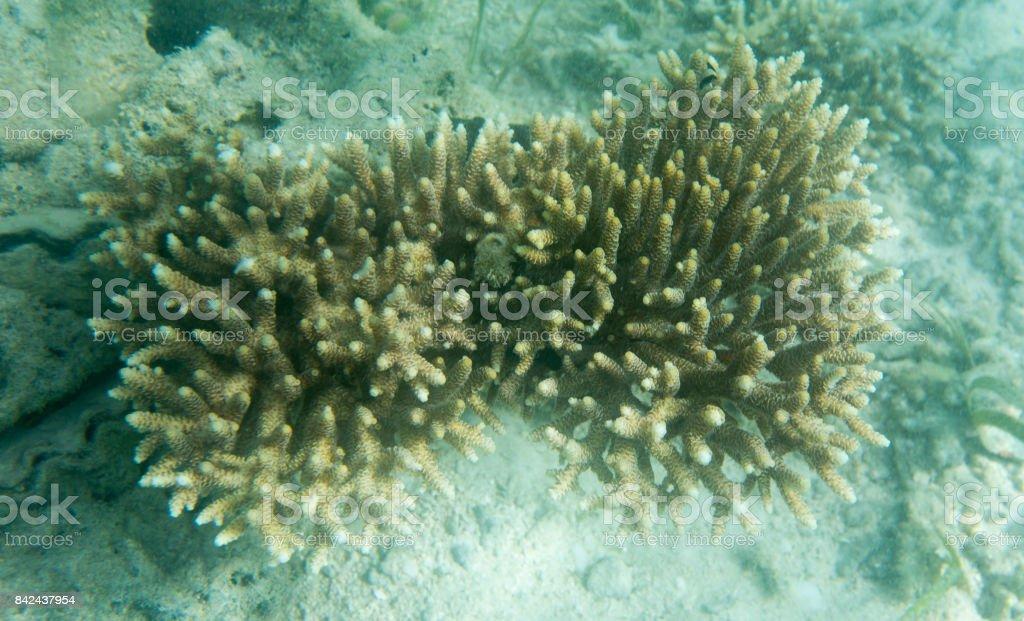 Acropora coral view stock photo