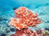 Similan Islands coral reefs, Phuket, Thailand