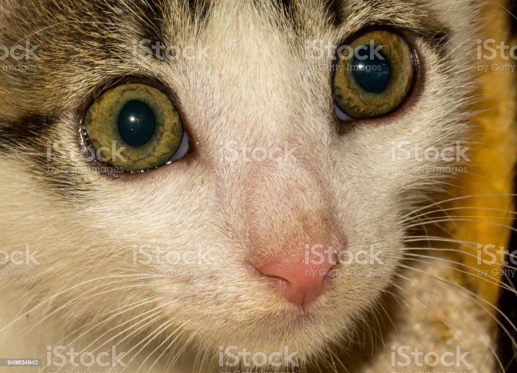 Action Animal Themes Cute Cat Domestic stock photo