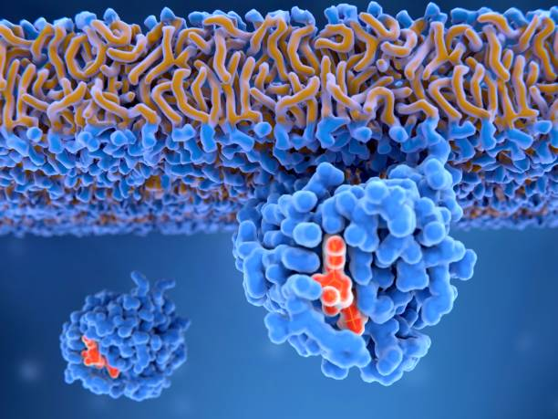 activated ras protein attached to the cell membrane. ras oncogenes lead to uncontrolled cell differentiation. - enzym zdjęcia i obrazy z banku zdjęć