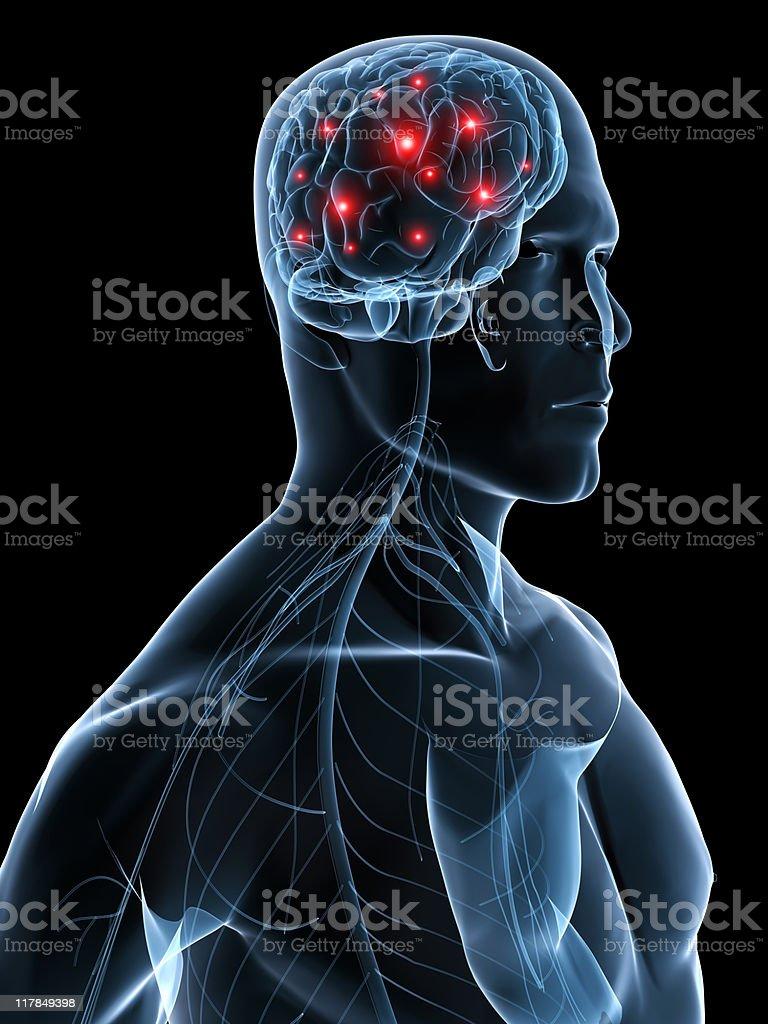 active brain royalty-free stock photo