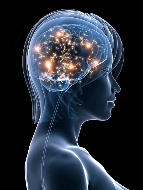 active brain  temporal lobe stock pictures, royalty-free photos & images