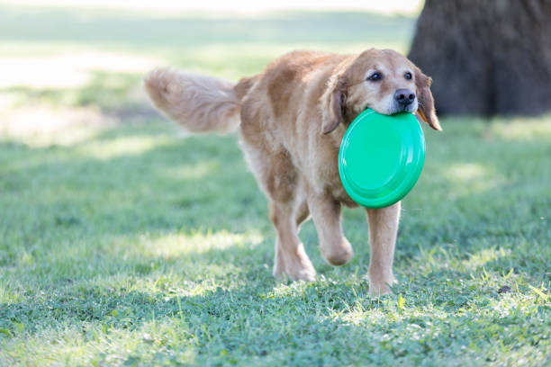 Active dog fetches plastic disc picture id857965652?b=1&k=6&m=857965652&s=612x612&w=0&h=rufwrdndrzcz3v37cju3thadvdi1 thnwshjrv09cye=