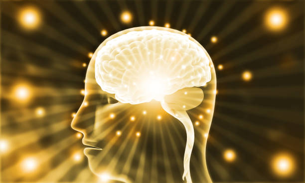 Active human brain on digial background stock photo